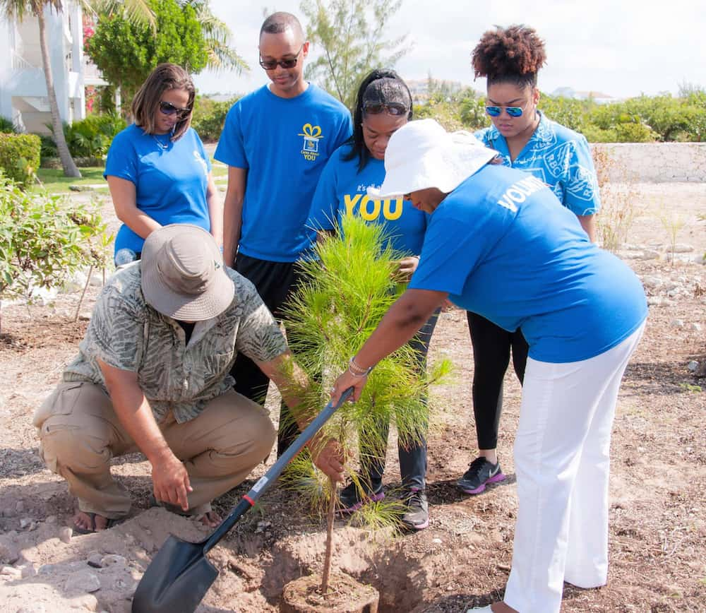 RBC employees assist Bryan Naqqi Manco with some planting in the model garden. Here they are planting a sapling of the endemic Caicos pine; Copyright: Dr Eric Salamanca, DECR