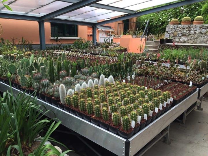 The plant nursery at the Alamada botanic gardens; Copyright: Prof John Cortes