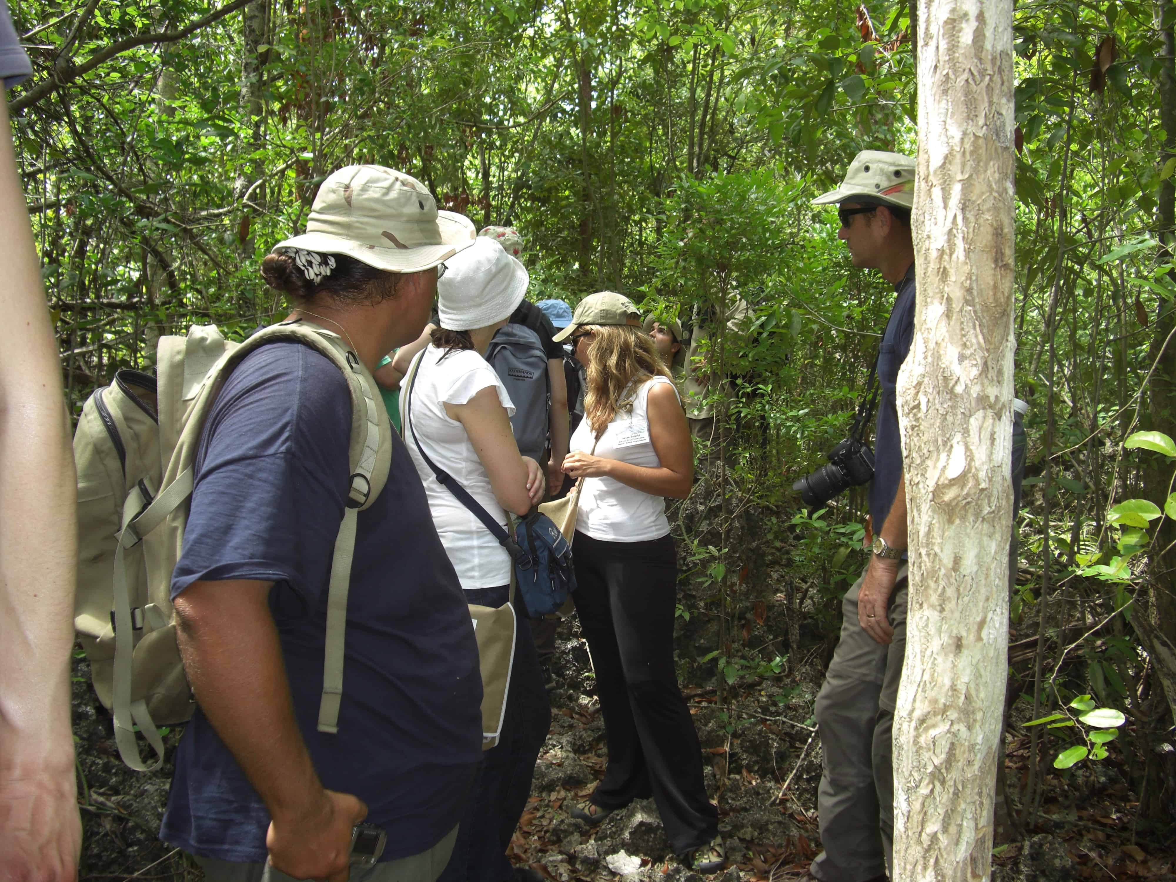 Mastic Reserve trail, Grand Cayman