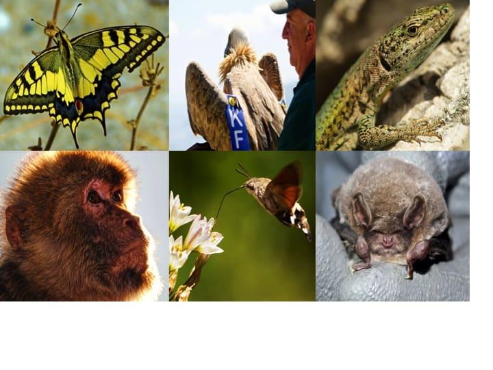 Gibraltar's fauna and flora; Copyright: HMGoG Department of Environment