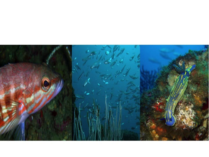 Rich marine environment in Gibraltar's waters: Copyright: HMGoG Department of Environment