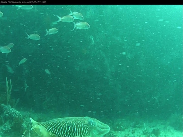 View from the underwater camera linked to the internet; Copyright: HMGOG/GONHS