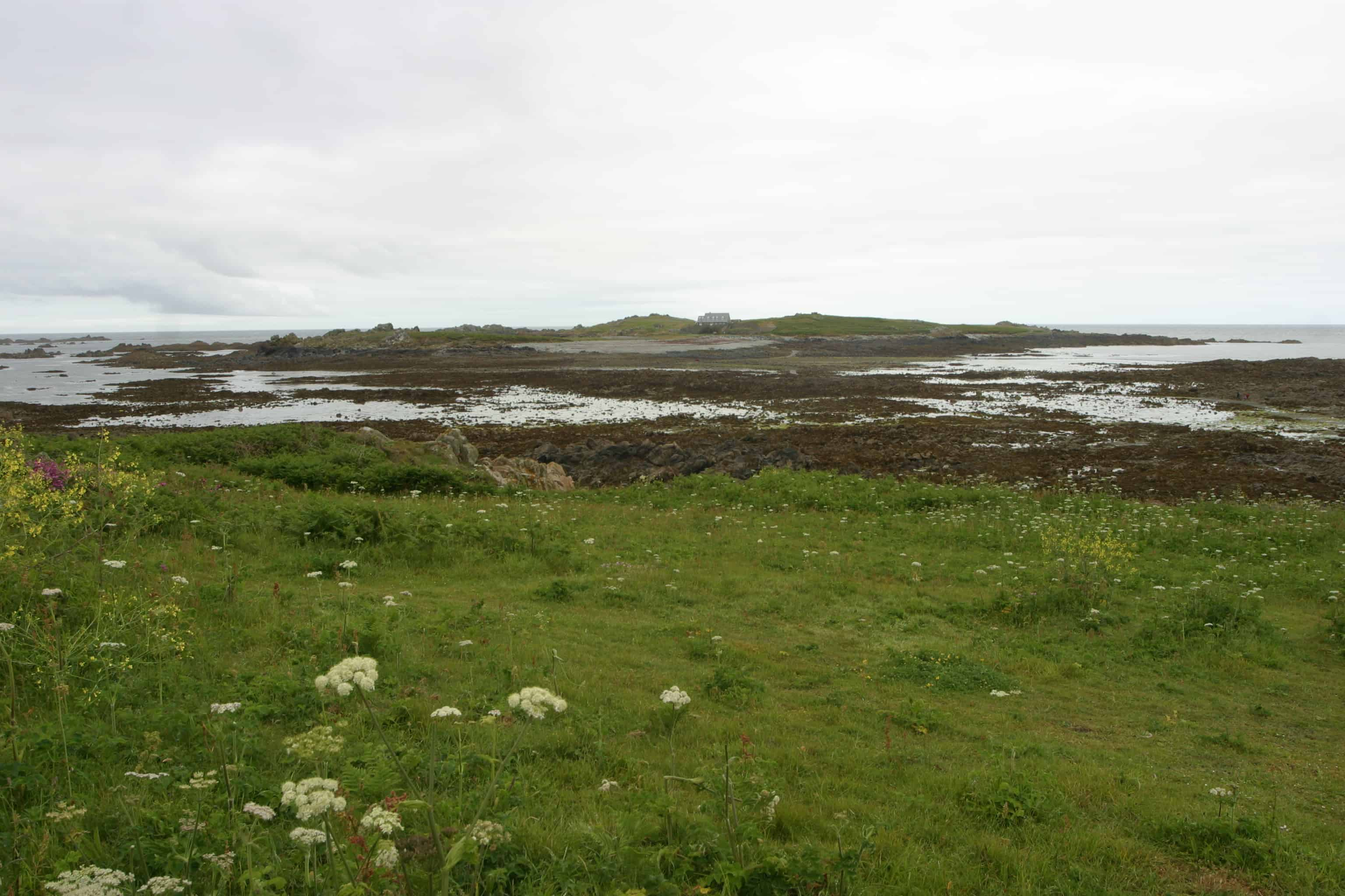 Part of Lihou Island & L'Eree Headland Ramsar Site; Copyright: Dr Mike Pienkowski