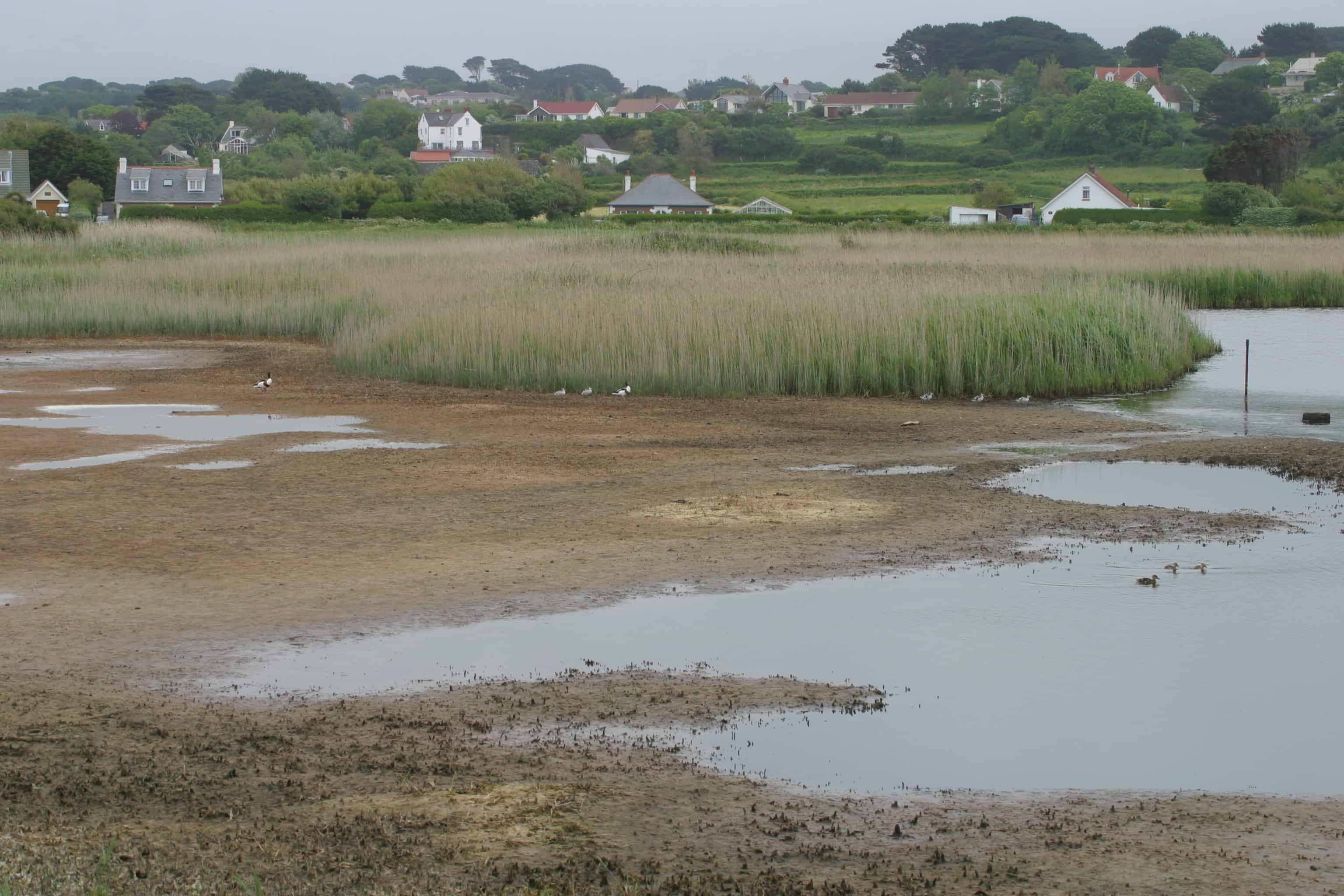 Guernsey has a varied landscape of town, villages, rolling farmland, ponds and marshes; Copyright: Dr Mike Pienkowski