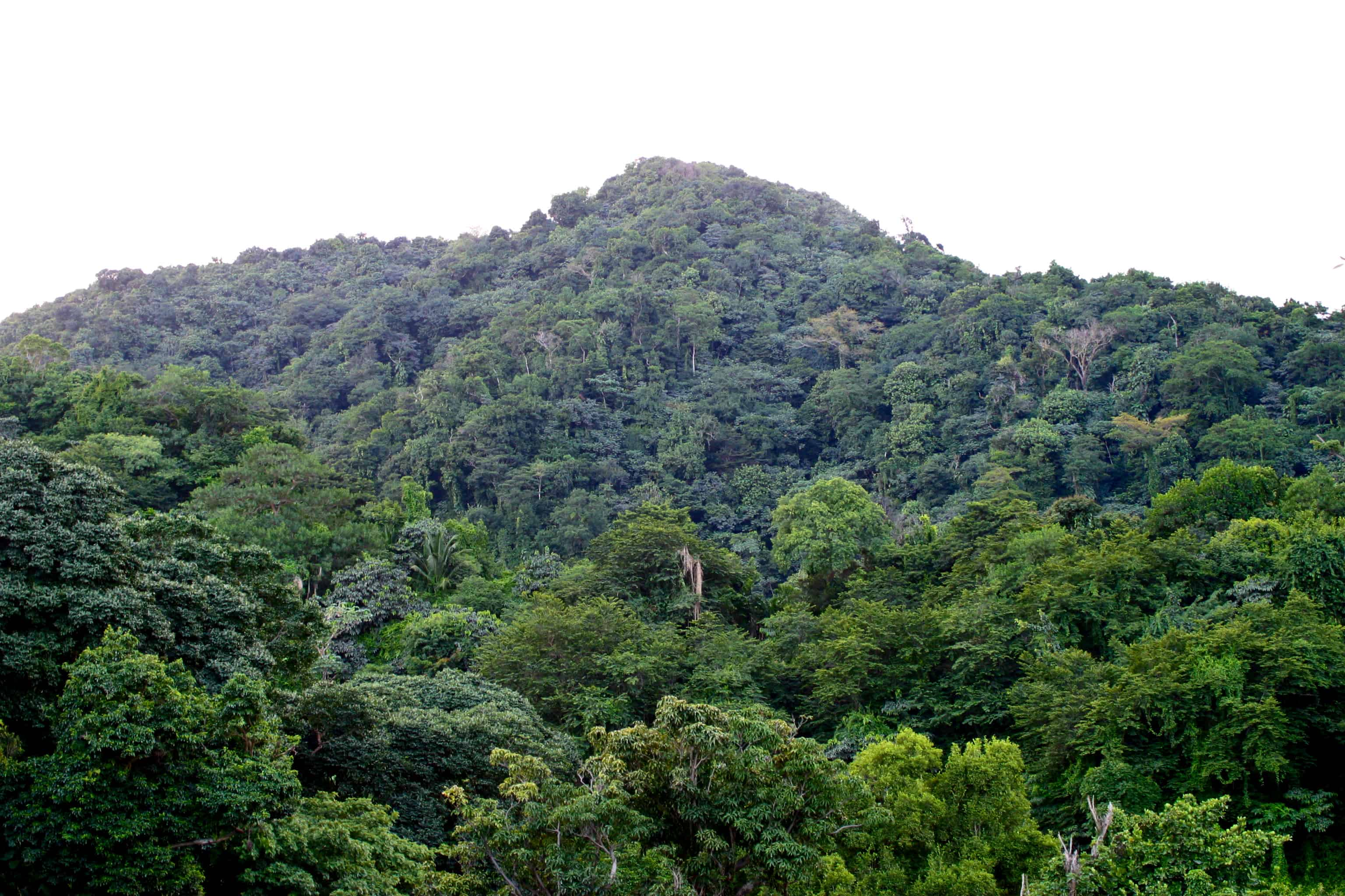 Centre Hills Forest Reserve: Copyright: Dr Mike Pienkowski
