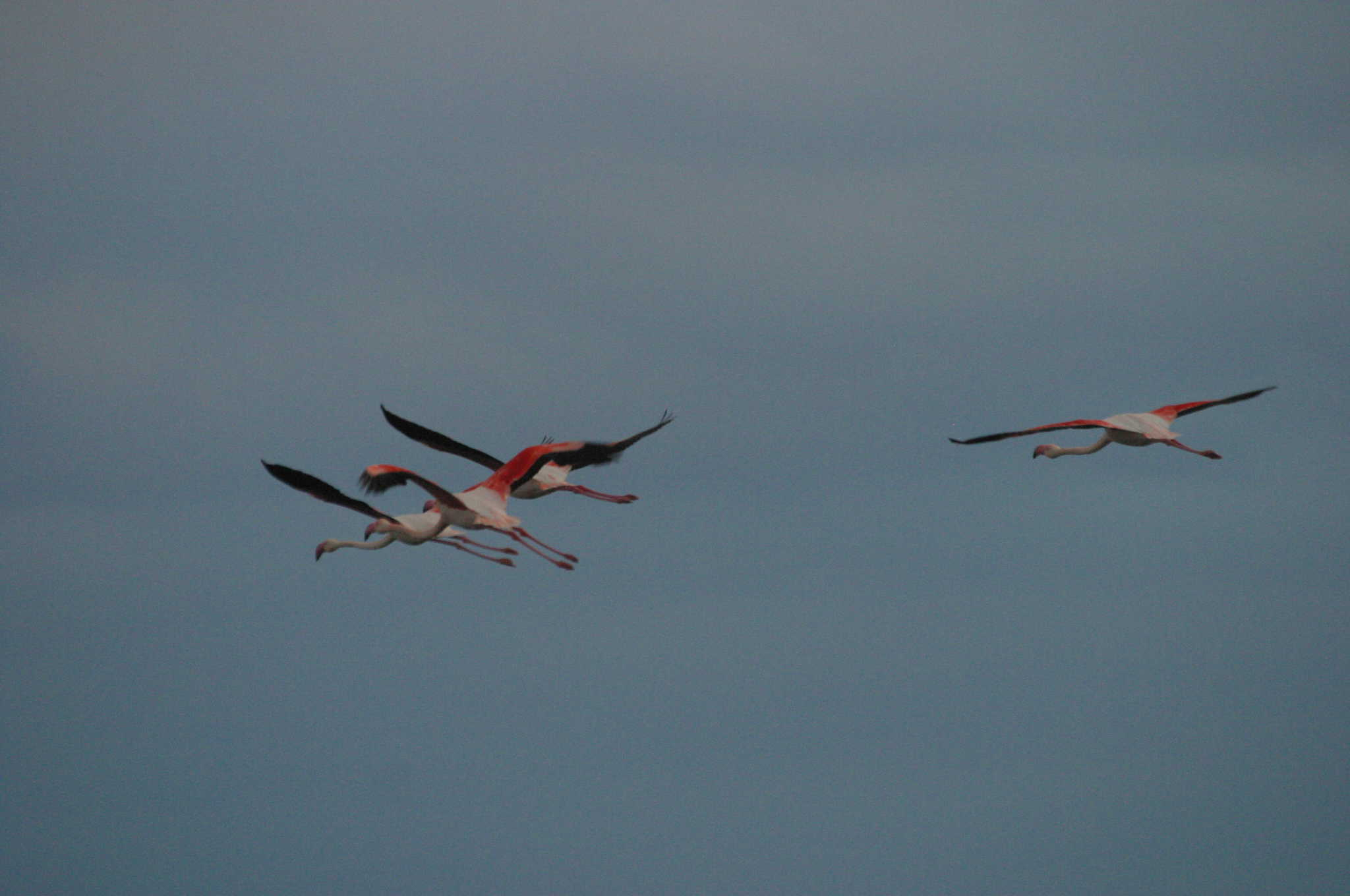 Flamingos over Salt Lake; Copyright: Dr Mike Pienkowski