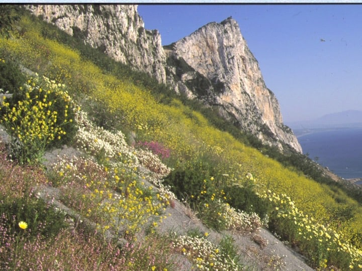 the former water catchment slopes have been cleared of their covering, allowing native plants to re-establish with management assistance. Copyright: HM Government of Gibraltar (HMGOG) / Gibraltar Ornithological & Natural History Society (GONHS).