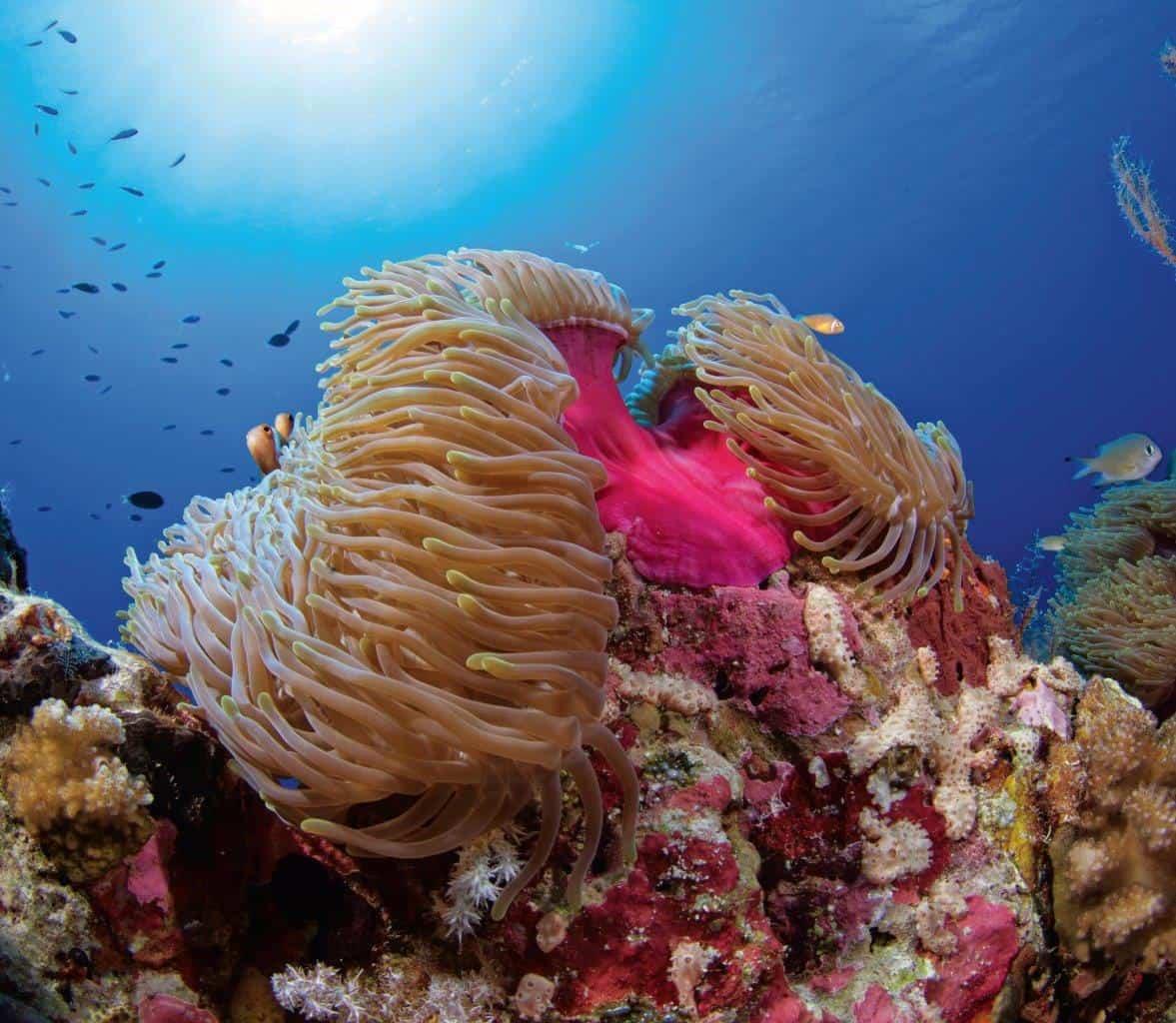 Reef life, BIOT Copyright: Stewart McPherson