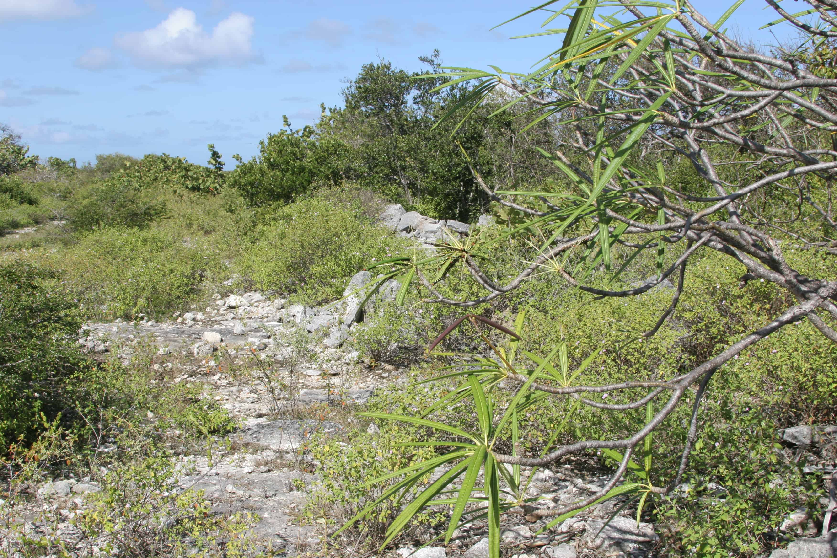 Dry scrub ecosystem on Anegada; Copyright: Dr Mike Pienkowski