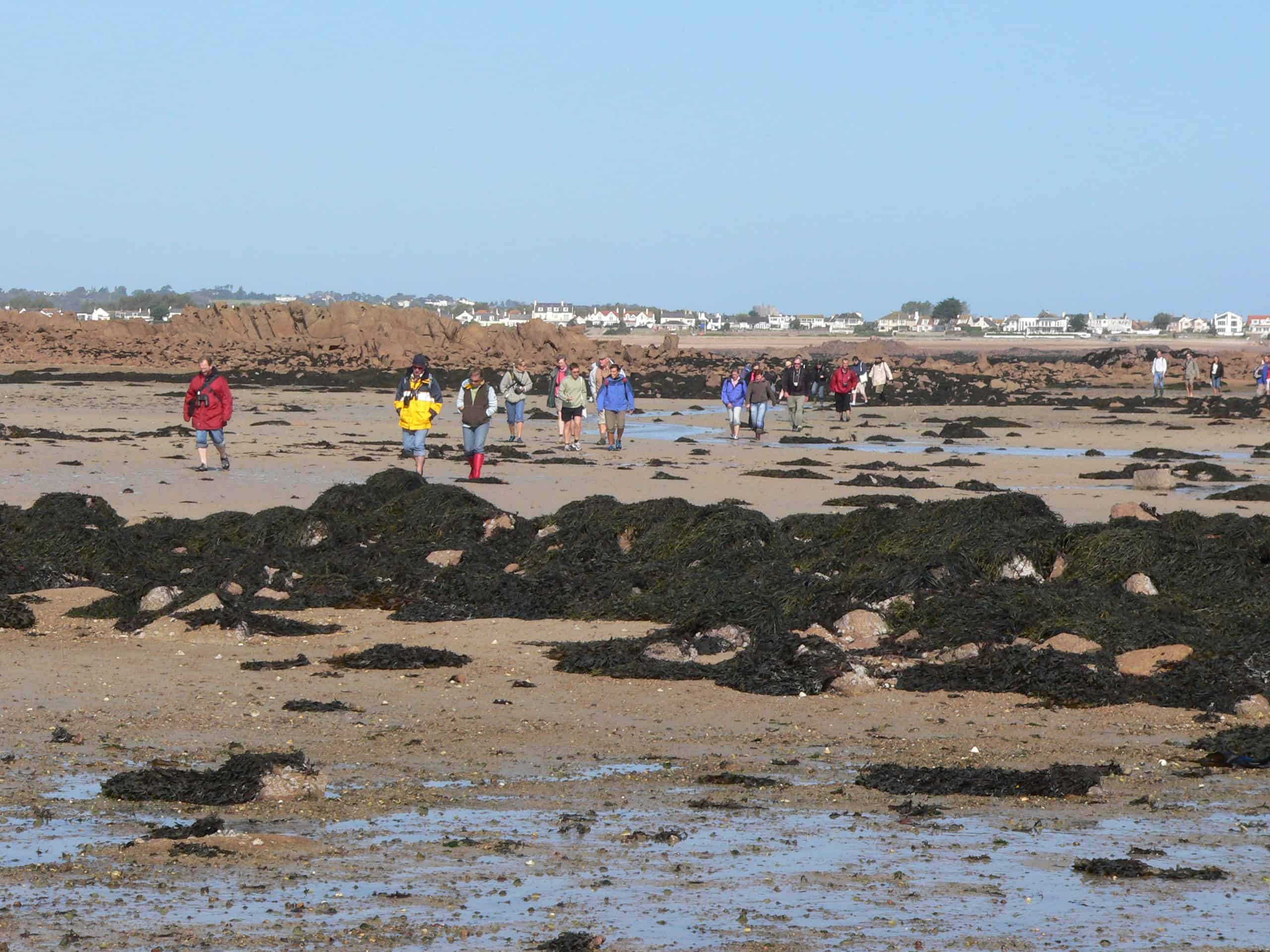 A major feature of Jersey is extreme tidal range, so that its area at low-water is hugely larger than at high-water. A part of this range is illustrated as the members of the UKOTCF conference there in 2006, while on their site-visit, pass intertidal rocks much taller themselves, but which are covered at high-water. Copyright: Dr Mike Pienkowski